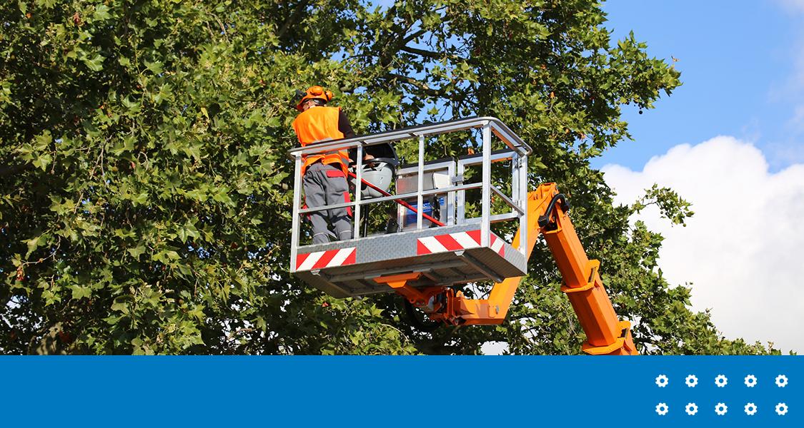 Dicas de segurança durante podas de árvores